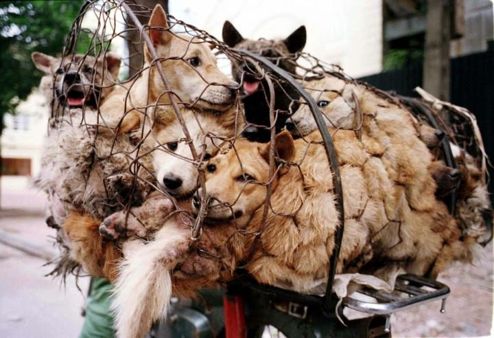 #IfMyDadWasPresident He'd make #China END FOREVER #YulinDogMeatFestival  http://t.co/UYQo9jtPC3 #dogs #anipals #wlf