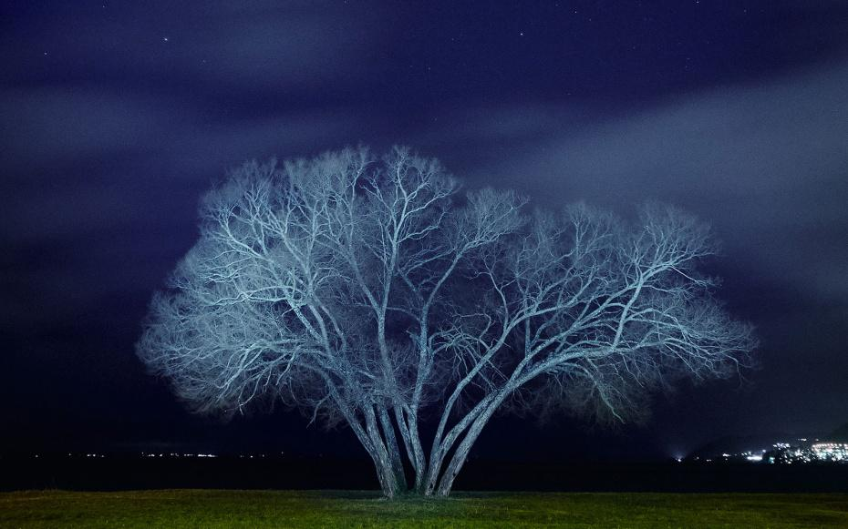 14 stunning photos of the Broccoli Tree that will make you want to go to Sweden.  one: