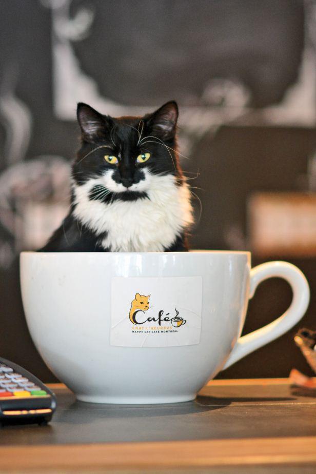 Get your feline fix at a cat café near you: