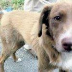#roma, cagnolino spinto fuori dal bus: il padrone se ne va e lo lascia in strada http://t.co/lTdMHylHpG http://t.co/v6OZjcWhcc