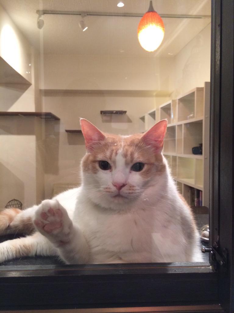 イクミママのどうぶつドーナツ本日入荷致しました! しばらく品切れでしたが、定番のミケも含めて6種類ご用意しております♪ テイクアウトも可能なのでお申し付けください(*^^*) #cat #猫 #猫カフェ http://t.co/hcwzctIwna