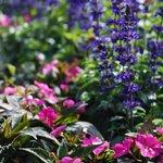 #Kesä tai ei, kaikki vuodenaikaan kuuluvat kukkaset on nyt istutettu ympäri Helsinkiä. Teitä varten. http://t.co/U8eFqOFP9o