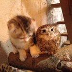 Котёнок и совёнок http://t.co/pe7FuAgLkF