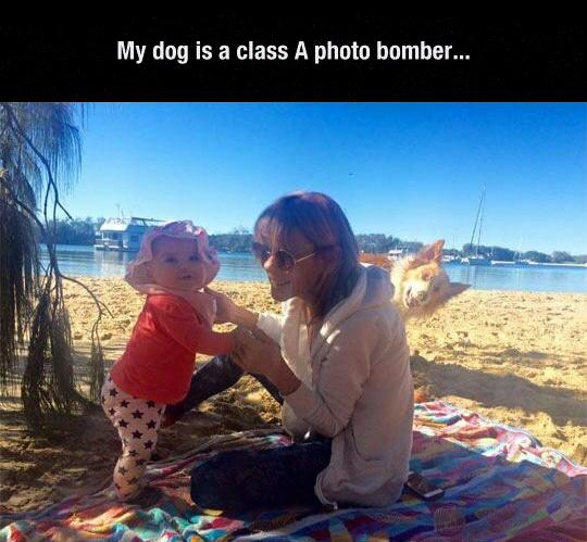 This dog is the best photo bomber I have ever seen!