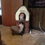Ох уж эти кошки http://t.co/OYDKJOkV8D