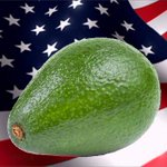 who would you rather have in office? rt for an avocado. fav for donald trump. http://t.co/aZBQ8uZWG0