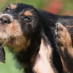 Animal pharma: a treatment for dogs with itchy skin could prove to be a tonic for investors http://t.co/RcKhIdp6XO