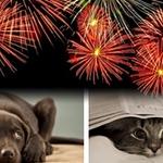Handling #PetAnxiety on the #4thofJuly. #PetSafety #Dog #Cat http://t.co/X4sgIimlCZ http://t.co/ulxP53ltDz @halopets