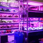 RT @FastCompany: This desktop farm is like a 3-D printer for fresh, natural food: http://t.co/M8bTpZohHC http://t.co/JxQ4R8hoog