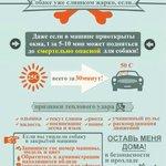 #Новосибирск #нск #nsk #лето #жара #собака #важно Актуально как никогда! http://t.co/whVYhT2ww6