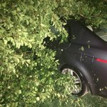 Storm downs trees across Cheatham County: http://t.co/S3yLDXzt8O http://t.co/wyHzEAmY4D