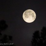 Miss last nights Buck Moon? Check out the photo gallery inside this story http://t.co/ovJVteBTBu http://t.co/MpDP8UKfJk