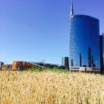 #Wheatfield Il 9 luglio festeggiamo il raccolto. Sarete con noi? #Milano #PortaNuova h 15-19.30 http://t.co/Mjv6eRUIRf