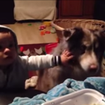 Baby is so mad his dog is better at saying
