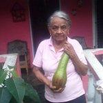 @imapanama @MIDAPANAMA @Juanhidago cosecha de aguacate en siogui arriba..concepcion bugaba.chiriqui.mi abuela http://t.co/WeoX2HFozN