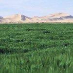 مدينة #مُرزق .. عندما تختلط الصحراء بحقول القمح ! #ليبيا http://t.co/eyHnCKDRLy