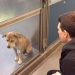 Es el mismo perro, un día antes y después de ser adoptado. :) http://t.co/bPxg7wtNV9