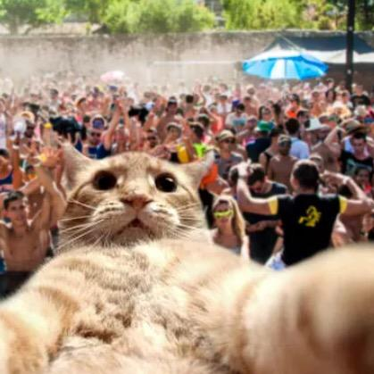 #EDC tonite was like Whoa! See y'all tmrw 4 my last set. It's streaming live, so Cat-Chit! C what I did there