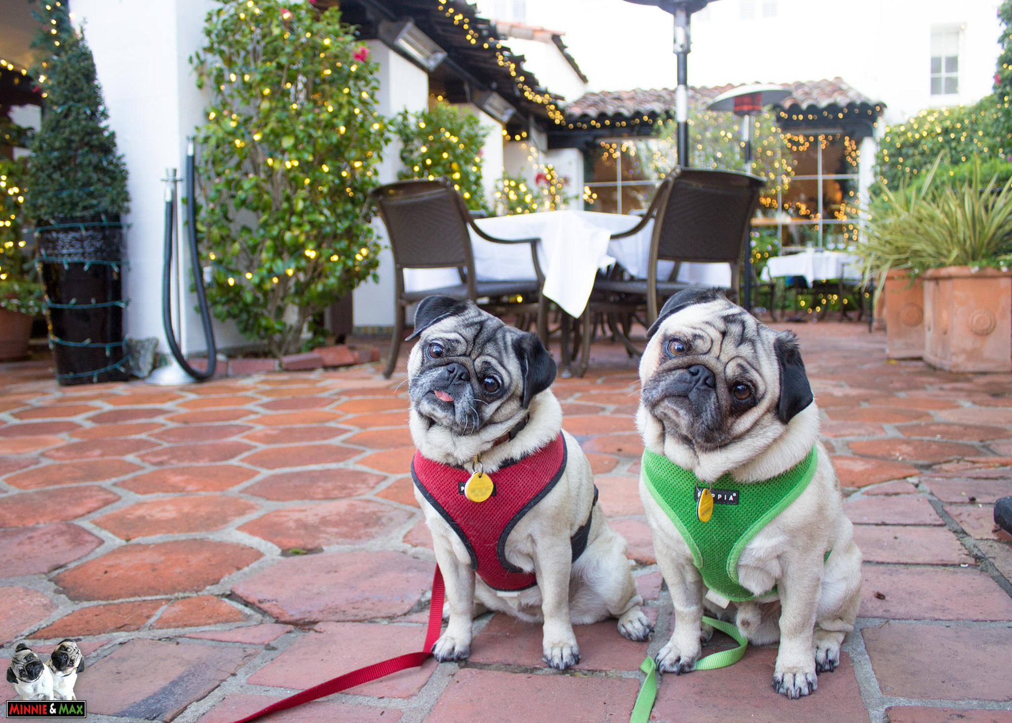 We love dog-friendly hotels and restaurants! @TheCypressInn @GoPetFriendly @Carmeldogfriend #pug http://t.co/Rn38f2zGLr