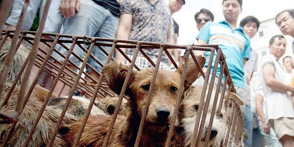 .@RickyGervais, @GiseleOfficial, and @RubyRose slam China's dog eating festival