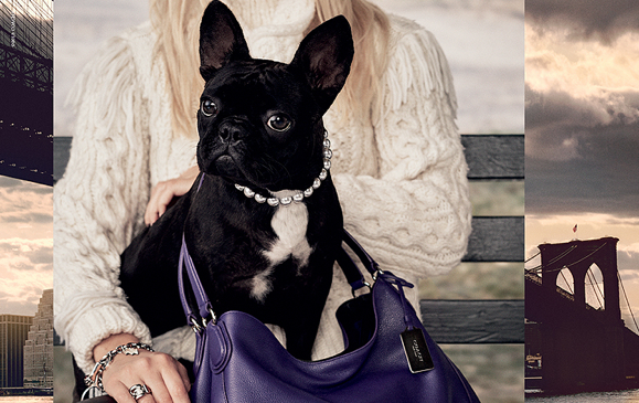 Of course @ladygaga's dog is a model! Your exclusive first look at Miss Asia's @Coach ad http://t.co/eigW3FExgu http://t.co/NV67rfpbun