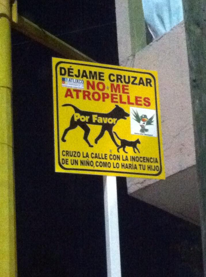 Acá en Atlixco, Puebla tienen cultura animalista... http://t.co/9bLpDu7kpG
