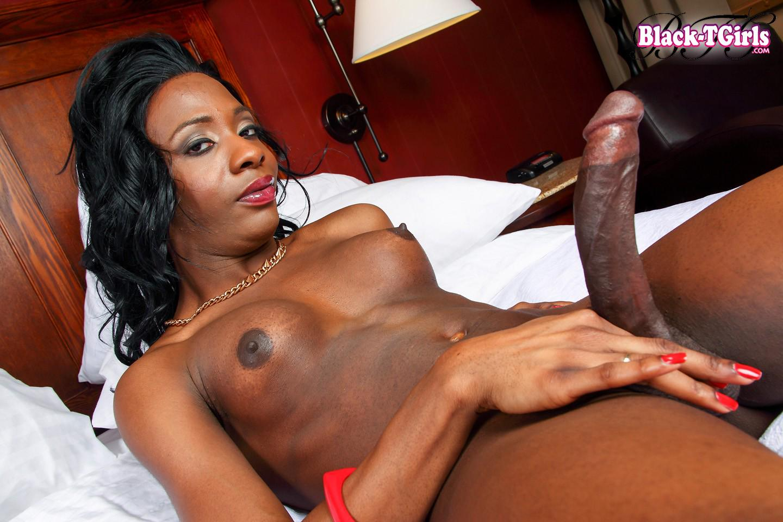 free black shemale porn tube № 79482