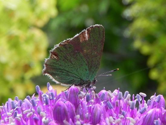 How To Attract #Butterflies Into Your Garden https://t.co/R82LwIymxL via @MyGardenSchool online #gardening classes http://t.co/BHvYryLa5q