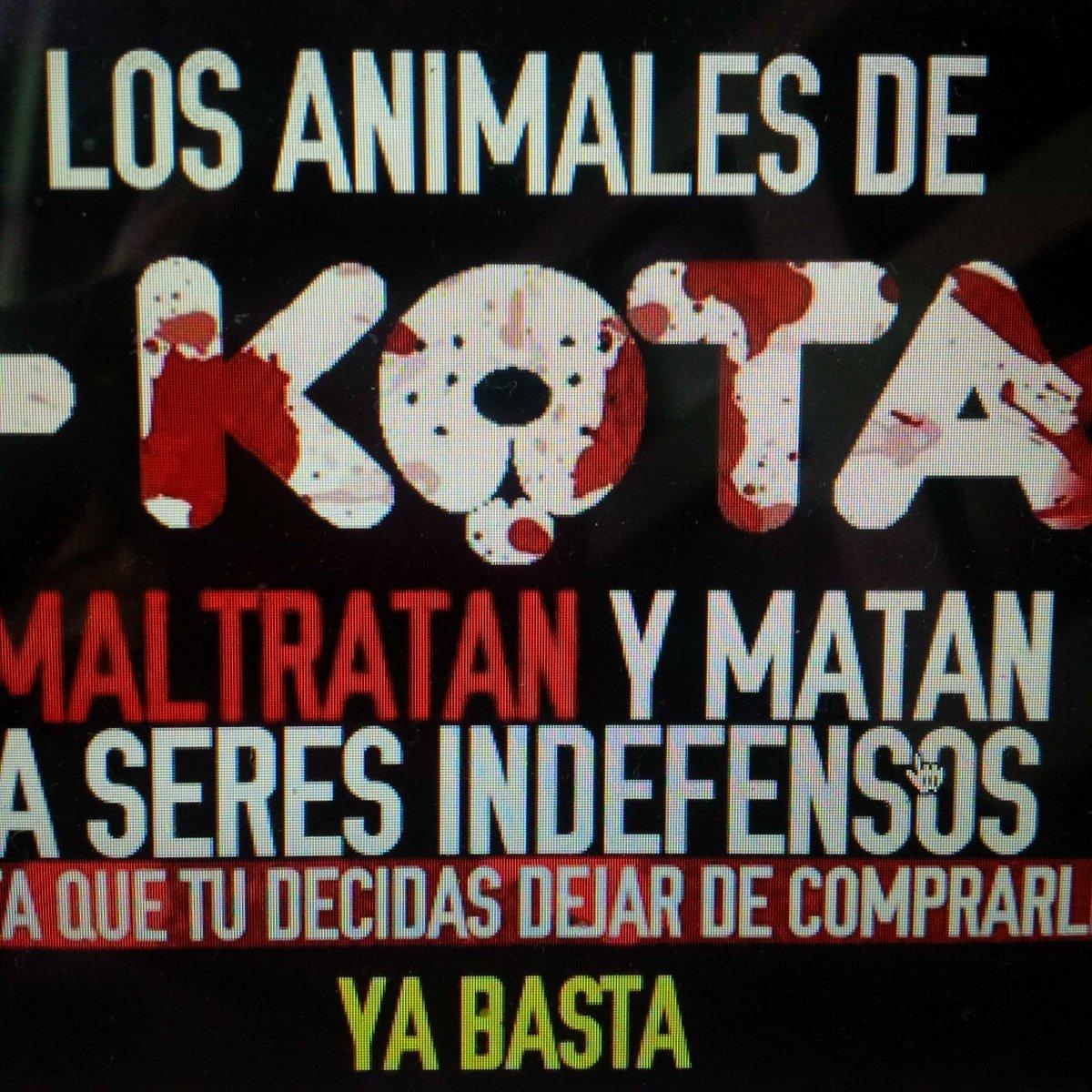 Por favor RT! Se los digo con toda honestidad. Esa cadena de tiendas tiene que dejar de vender animales. Es infame! http://t.co/FB81FPNX2F