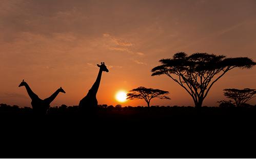 連載コラム、WEB版公開されました。 RT @yomiojo: [web ojo]<平塚元明氏の連載コラム「マーケボン」Vol.38>今回の推薦本は『OUT OF  AFRICA http://t.co/Ucjt4mh4ek http://t.co/Gc2tc7nmDA