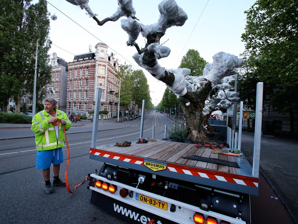 1000 jaar boom komt aan @Artis. Mijlpaal bij bouw van het nieuwe jaguarverblijf. Lees meer op http://t.co/Fj2VrPH643 http://t.co/2fuq9Mlvm8