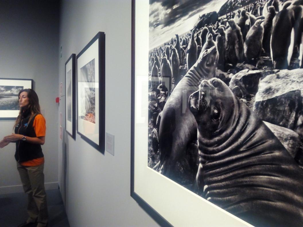 A partir de ya podéis ver la exposición de Sebastiao Salgado en @Caixaforum. ¡Preciosas fotografías! #expoGénesis http://t.co/CYNMgqmhex