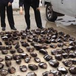 RT @karmanomad: Russians detained in China for attempting to smuggle 213 bear paws. #wildlifecrime http://t.co/vIF1u2iQQO