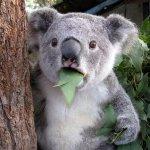 *en Be Okay* *trae la cuenta* -Gs 80.000 alcanza señor por su ensalada verde. - http://t.co/pMWXYQmYKw