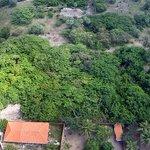 Piauí diz ter maior cajueiro do mundo e tenta derrubar título do Rio Grande do Norte http://t.co/ITmz7DpNbx #G1 http://t.co/CopQvXVPvT