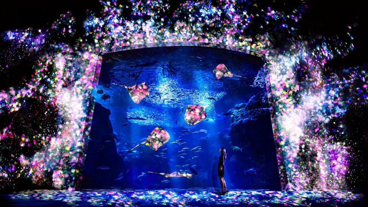 チームラボが、夜の水族館をデジタルアート空間に。夜の光の水族館「えのすい×チームラボ ナイトワンダーアクアリウム2015」7/18〜12/25 http://t.co/DjZvQVTc0d http://t.co/sax4rstJSR