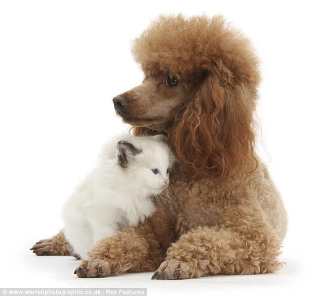 @ttsnoopy Hi my sweet puppy ttsnoopy! Hav a good weekend(^-^)v http://t.co/h67vqSYAE0