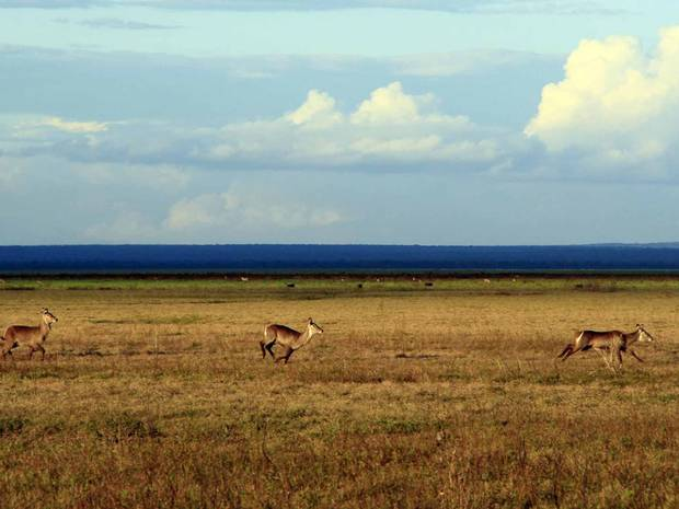 On safari in Mozambique's Gorongosa National Park: 'The most diverse park in the world'