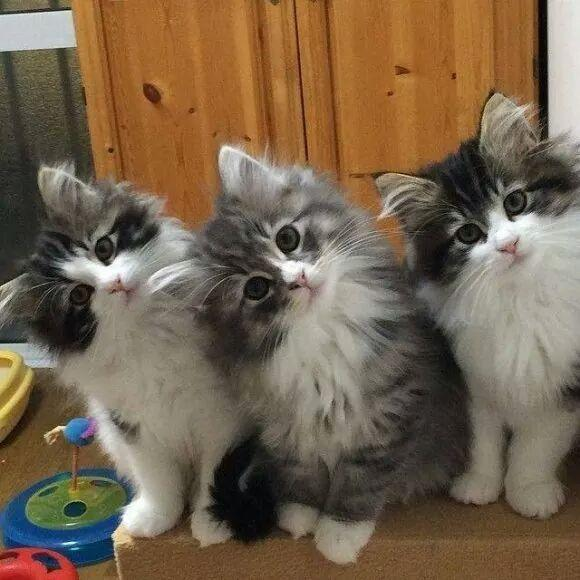 Awas Kucing Juga Bisa Kena Rabies - AnekaNews.net