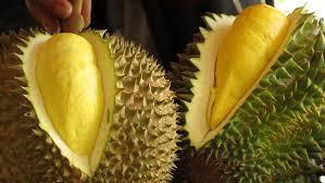 7 Falsafah Hidup Pada Buah Durian - AnekaNews.net