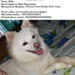 RT @LubunaKakka: @priyamani6 Priyaji, please help us #FindBella! She is missing since yesterday! :( http://t.co/m2RR29bYF1