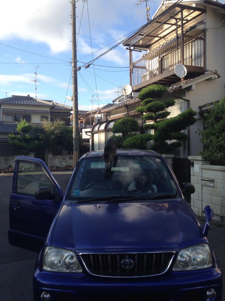 【UMA】ニューネッシー現る!!【ウバザメ】YouTube動画>22本 ->画像>113枚