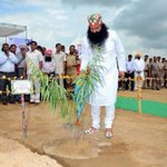 #MSGTreePlantationDrive is an initiative by #TheSuperHuman St.@Gurmeetramrahim ji for making our environment green http://t.co/gIhvbfMszz