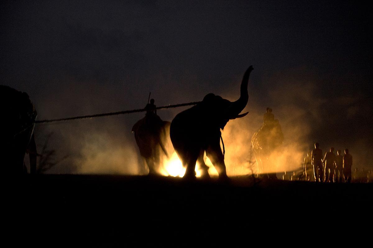 Inside an Elephant Capture http://t.co/Mvmwdr5Inn http://t.co/RHCyEXoVo2