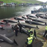 @Europarl_NL Why is the Danish navy aiding whale slaughter? Its illegal in #EU https://t.co/GQLim9MqwD #OpKillingBay