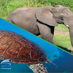 Visit two amazing #Tampa attractions for one incredible price with the NEW ZooQuarium ticket! http://t.co/3DDXONBYzo http://t.co/ZFG3AKNebN
