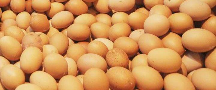 Awas Bahaya Mengintip Dibalik Manfaat Telur - AnekaNews.net