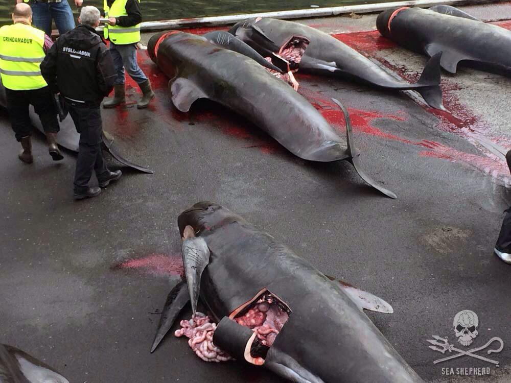 Waters of the Faroe Islands Run Red With Another Horrific Grind http://t.co/bHxF4tBsaw
