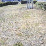 Типичное для Самары состояние газонов. Это Осипенко. Так почти везде. @DepBlagSamara @Zelenhoz http://t.co/1s5elt338j