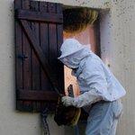 L'incroyable sauvetage de 20 000 abeilles à Sainte-Maxime http://t.co/gznAFgjXIz http://t.co/wWh3ebQchr